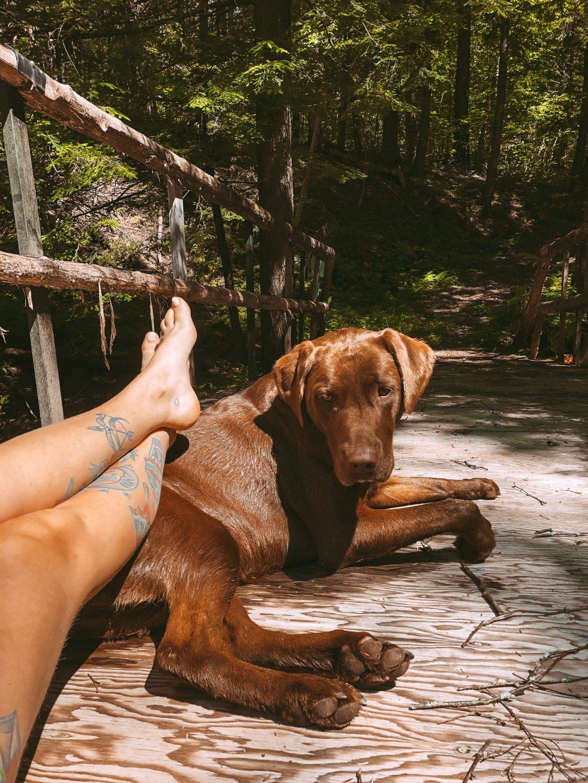 dog adventure